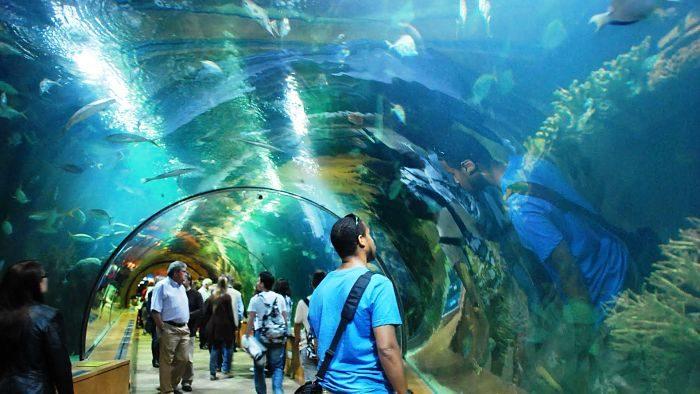 acuario de valencia