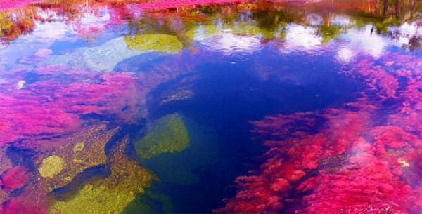 Un mar de siete colores