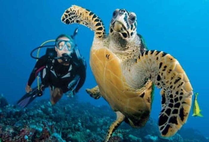 125-Tahiti-To-Dive-10-08-3_0