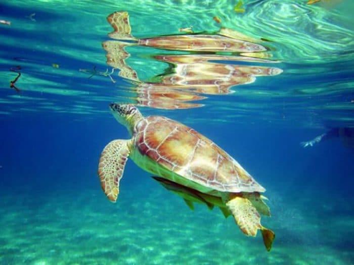 Una de las experiencias que puedes tener el Playa Akumal en la Riviera Maya