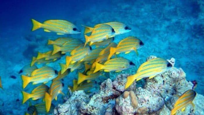 Fantástica imagen de las especies marinas que podremos ver en Mahahual