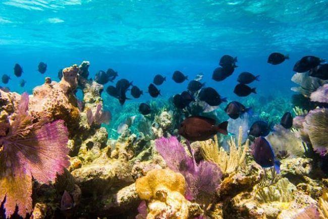 Una extraordinaria vista en el arrecife Bight Reef