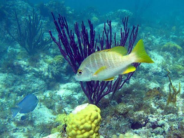 Un universo mágico de colores te esperan en Smith Reef