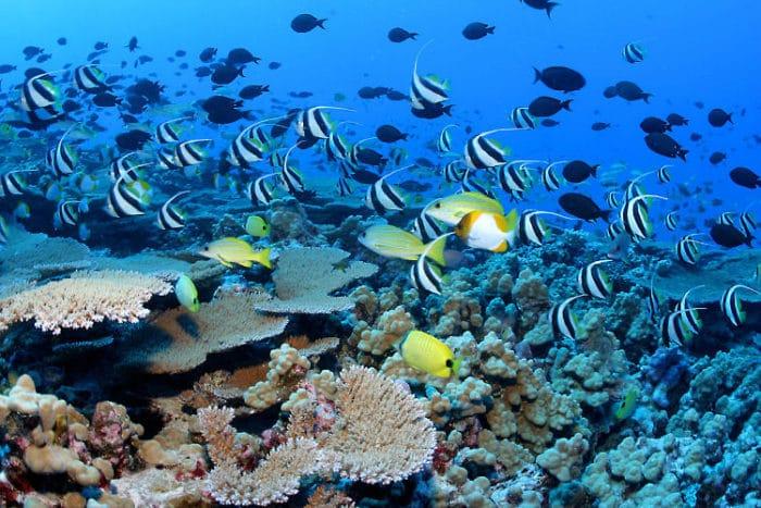 Cardúmen de peces y corales en Bora Bora