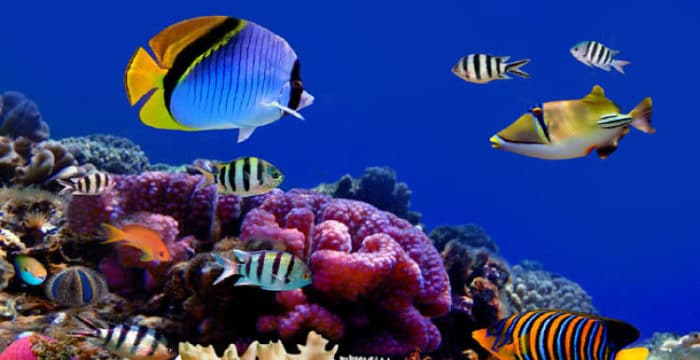 Coloridos peces que puedes ver en Maldivias