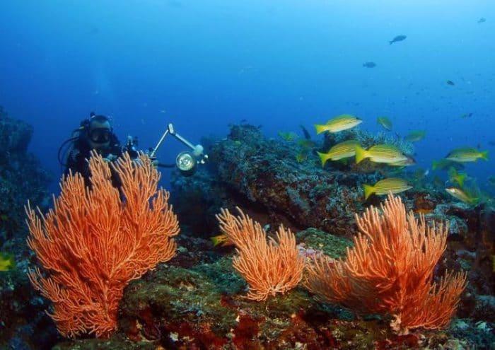 Colorido fondo de corales de Isla del Caño, Costa Rica