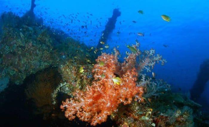 Corales al frente y el naufragio del SS Liberty al fondo