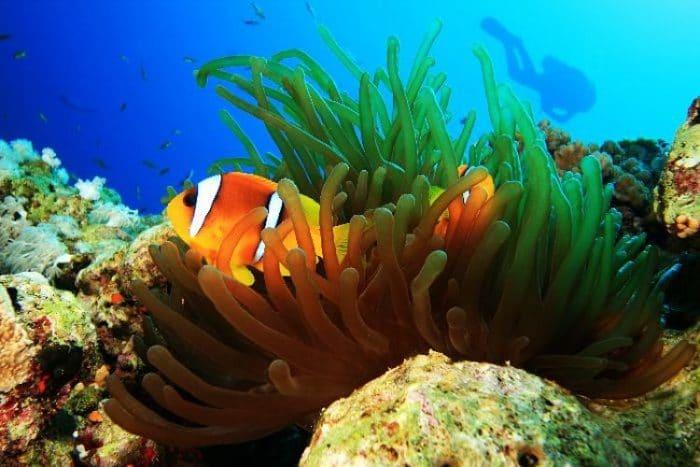 Hermosa fotografía submarina en el Mar Rojo