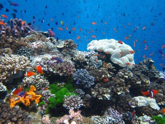 Hermosa vista submarina del Arrecife Namena en Fiji