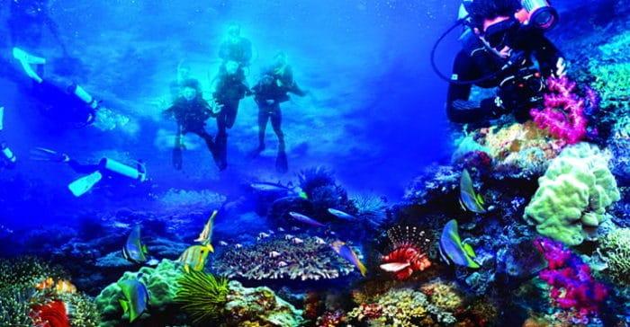 Fotografía de coloridos corales en Sulawesi, Indonesia