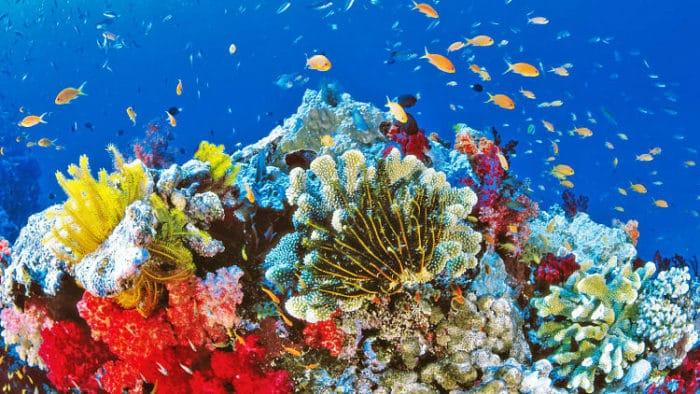 Magnífica vista en la Gran Barrera de Coral de Australia