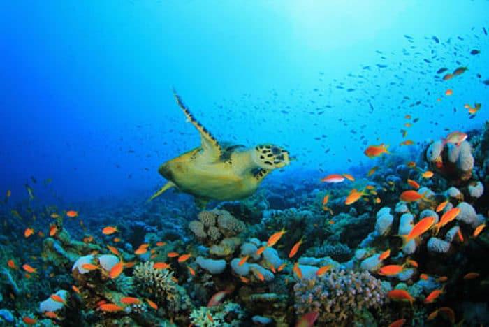 Vista submarina de Islas Galapagos