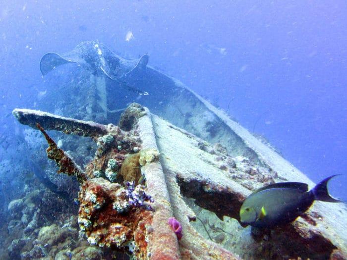 Vista del naufragio del SS Yongala en las costas de Australia