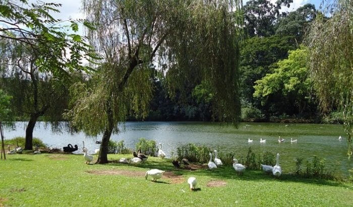 Vista del lago del Parque Ibirapuera