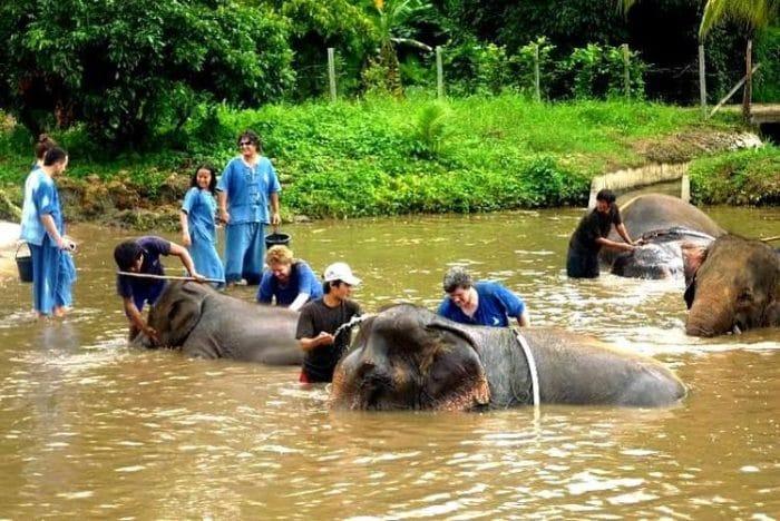 Visitantes bañan a los elefantes en el Parque Natural de Chiang Mai