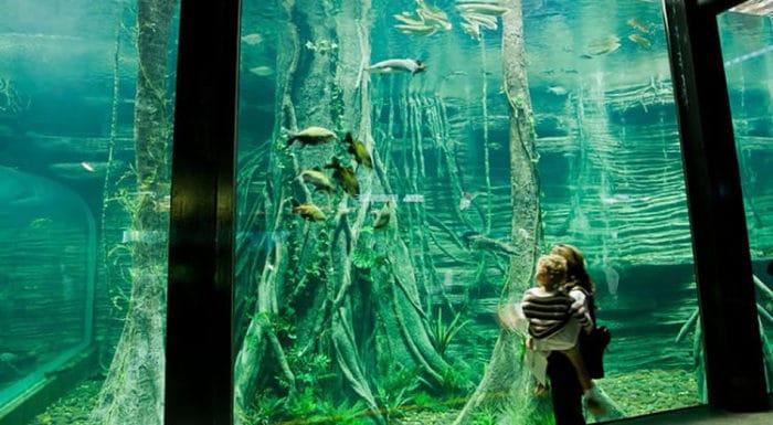 Una de las peceras del acuario del Parque Explora