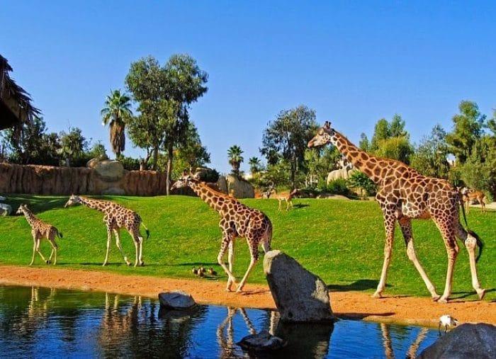 Hermosa imagen del paisaje en el Zoológico Bioparc