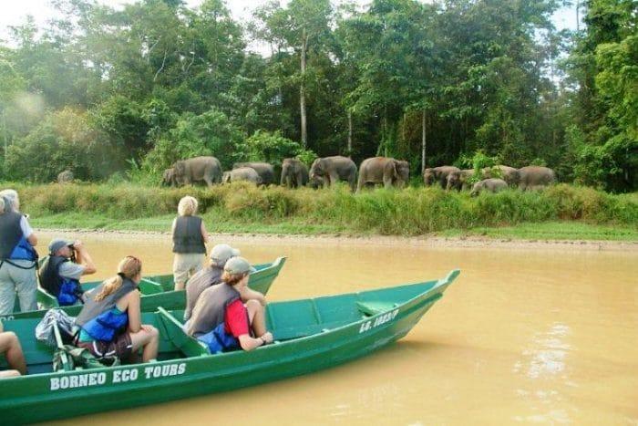 Tour ecológico en Borneo