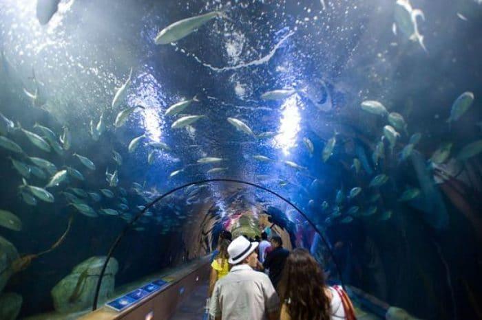 Uno de los túneles del Acuario L'Oceanografic
