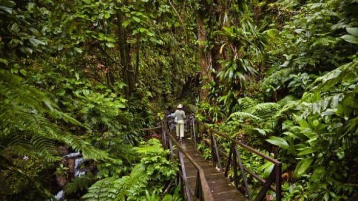 Excursiones ecológicas en Dominica