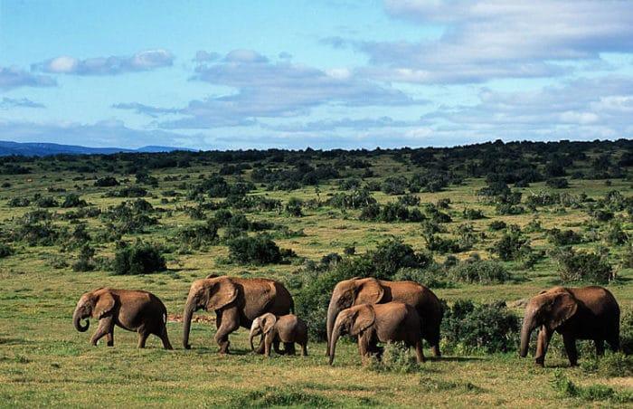 Hermosos paisaje sy huéspedes del Parque Nacional del Elefante Addo