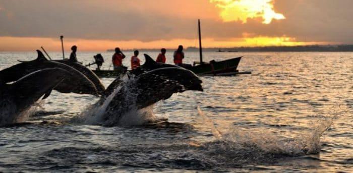 Vista de delfines en las aguas de Lovina