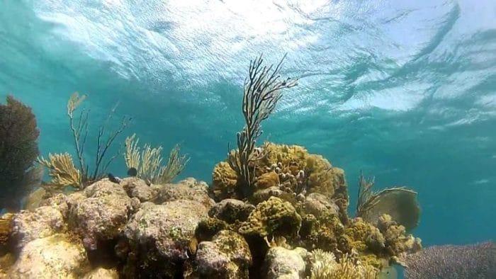 Hermoso arrecife coralino de Utila