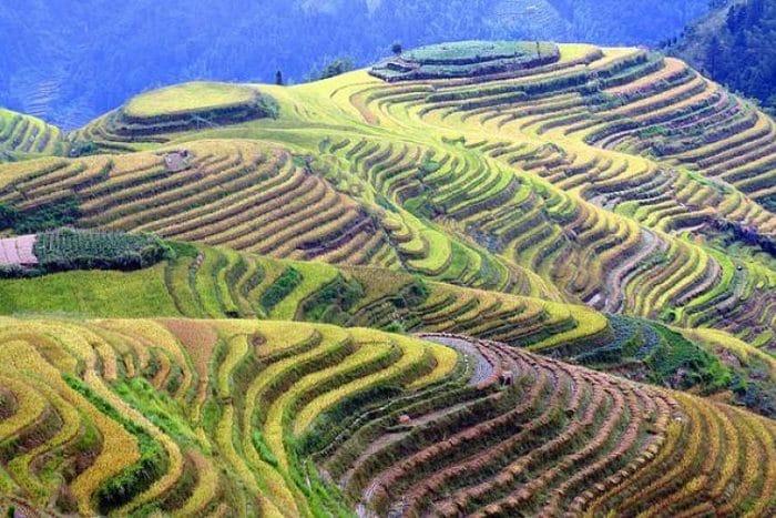 Hermosas Terrazas de arroz de Banaue