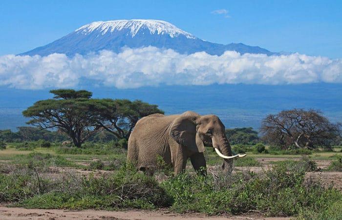 Safaris-en-África2