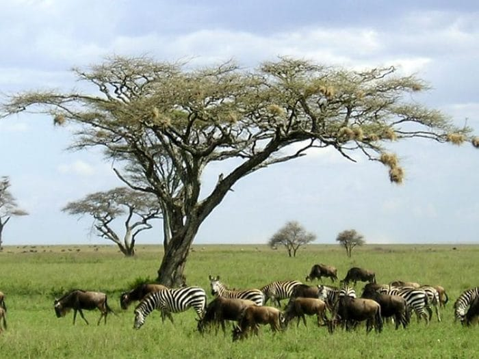 Safaris-en-África10