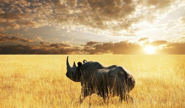 Rinoceronte en el Parque Nacional de Etosha