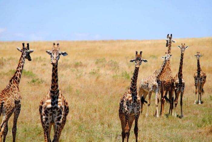 Safaris-en-África