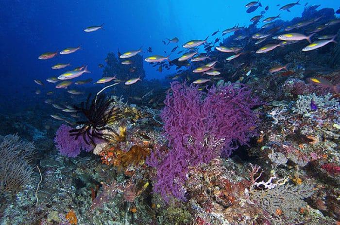 Una de las hermosas vistas del Arrecife de Coral de Tubbataha