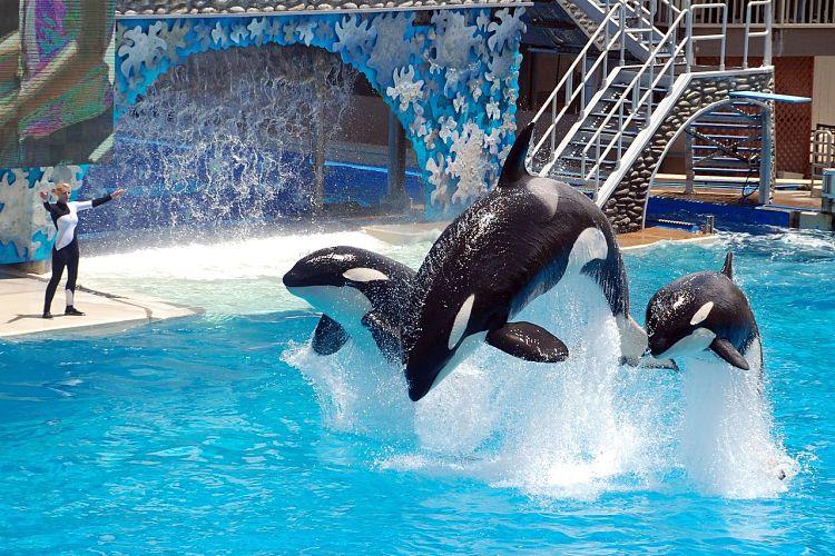 Uno de los espectáculos de SeaWorld