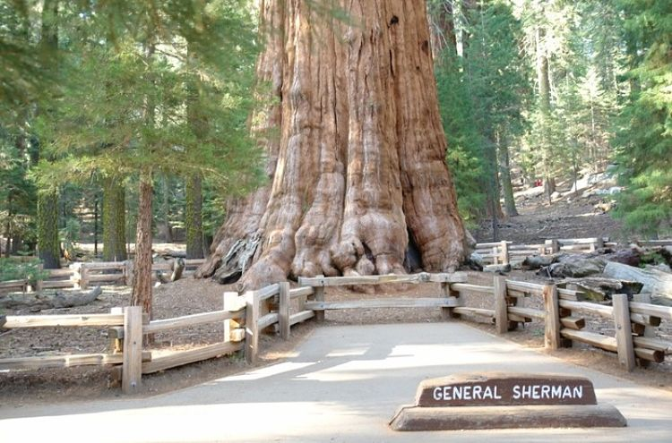 El imponente General Sherman