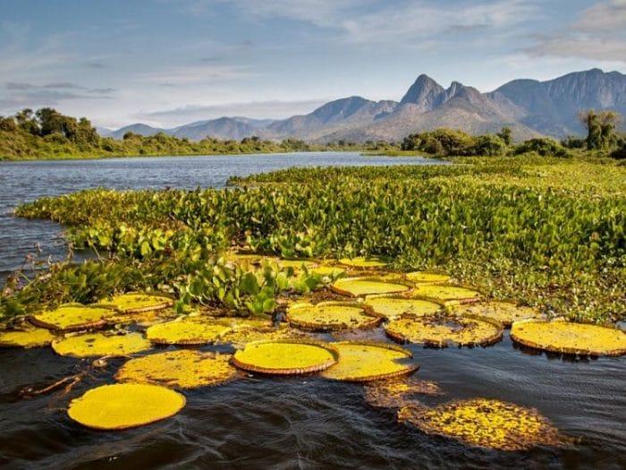 Parte del humedal del Parque Nacional Pantanal Matogrossense