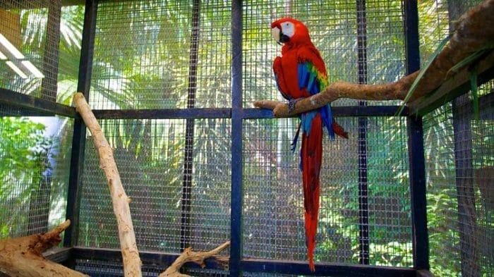 Reserva de Vida Silvestre de Barbados