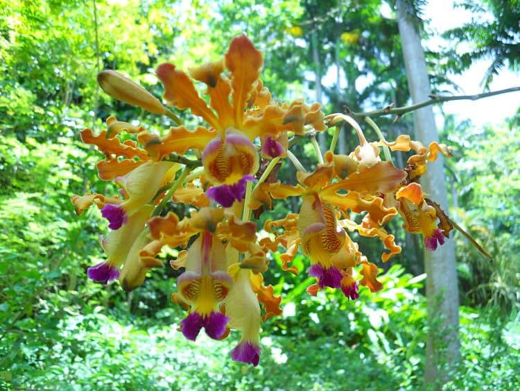 Bosque de las Flores