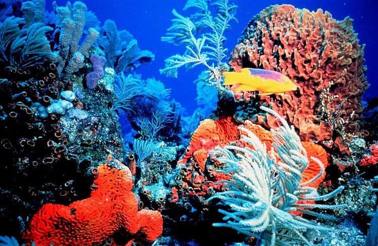 Buceo en Aruba