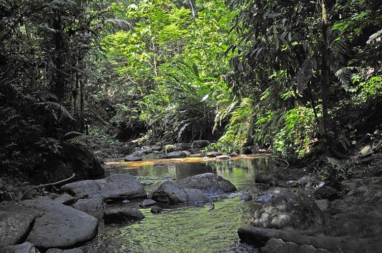 Parte de la Reserva Forestal Main Ridge en Tobago
