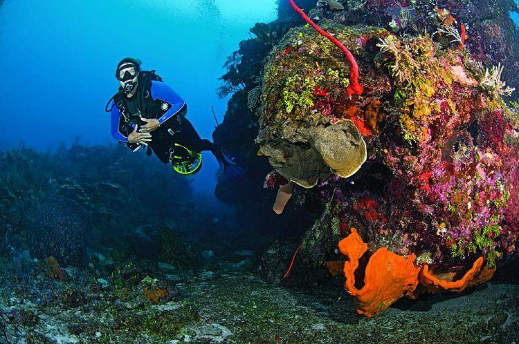 Buceo en las Islas Caimán