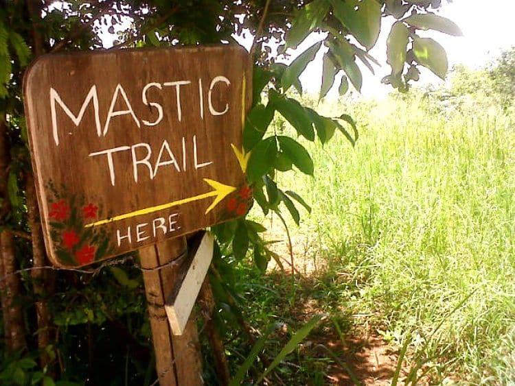 Reserva y Camino Mastic