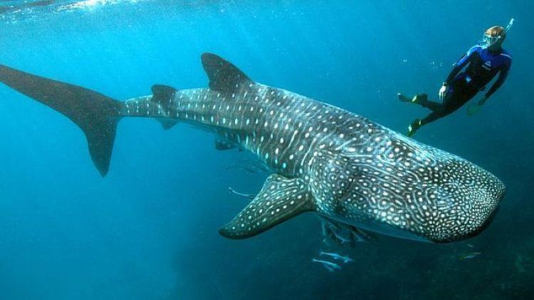 Arrecife Ningaloo