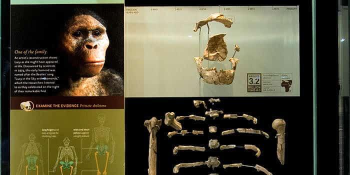 Museo-de-Historia-Natural-de-Londres-4
