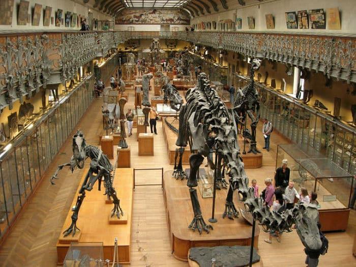 Museo-de-Historia-Natural-de-Londres-6