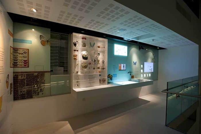 Museo-de-Historia-Natural-de-Londres-7