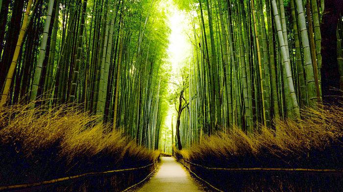 que-ver-en-Japón-3