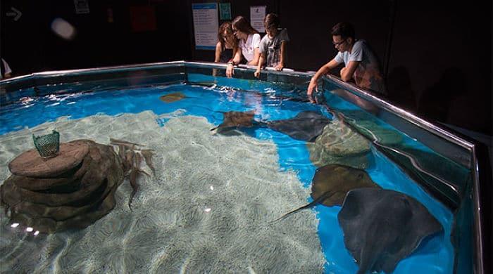 Costa de almer a un lugar encantador para unas vacaciones Aquarium en roquetas de mar