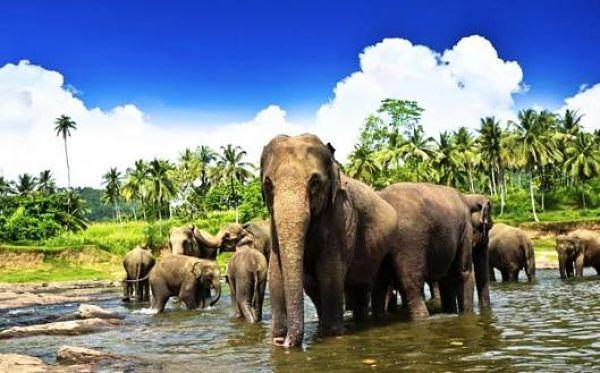 Un lugar obligado que ver en Sri Lanka