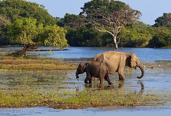 Sri Lanka es bendecida con fantásticos Parques Nacionales